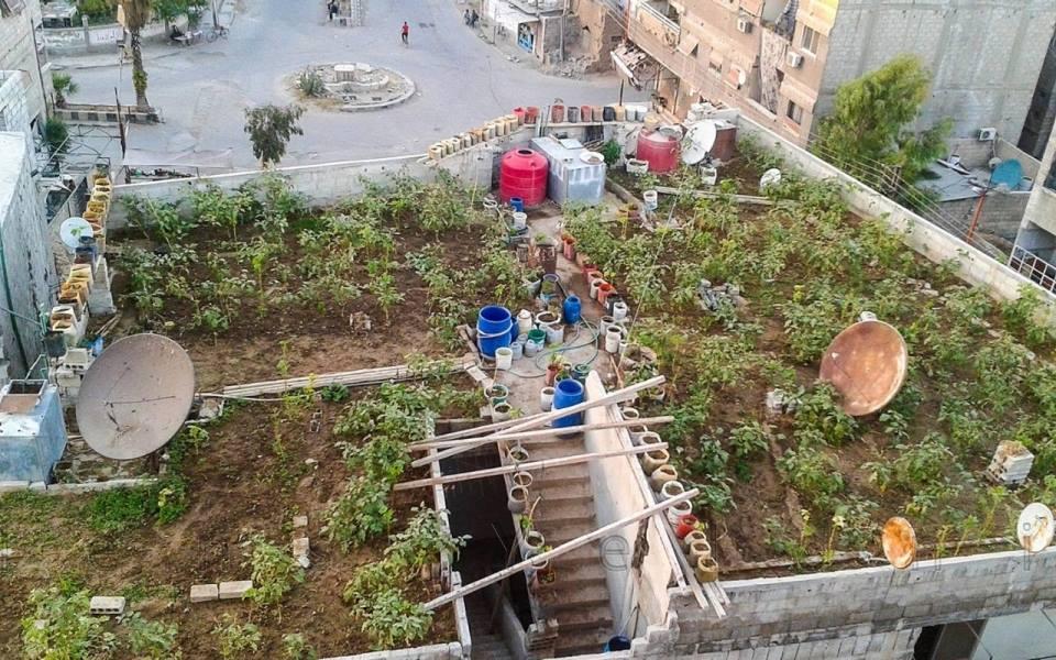 Rooftop farms in Yalda. Source: Lens of Yalda Youth.