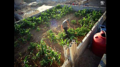 الزراعة على السطح: اختراع سوري بوجه الحصار