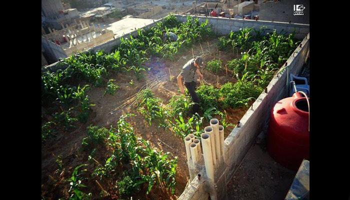 Abu Farouk in his rooftop farm. Source: Lens of a Yalda Youth.