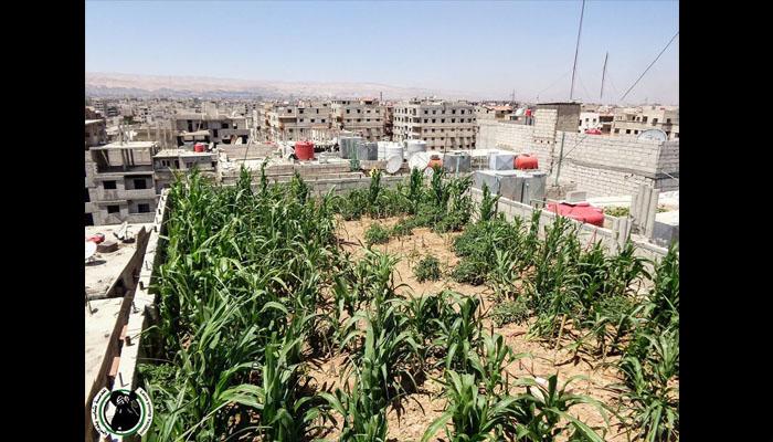 مزروعات على سطح بين في مدينة يلدا. المصدر: عدسة شاب يلداني