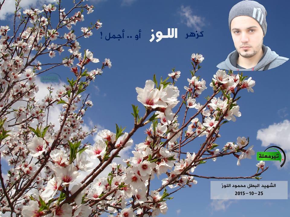 الشهيد محمد اللوز، المصدر: صفحة تيرمعلة مباشر.