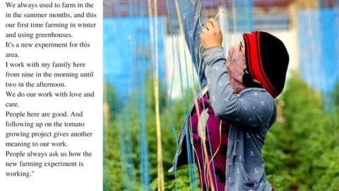كِنانة، مُزارعة في عامودا