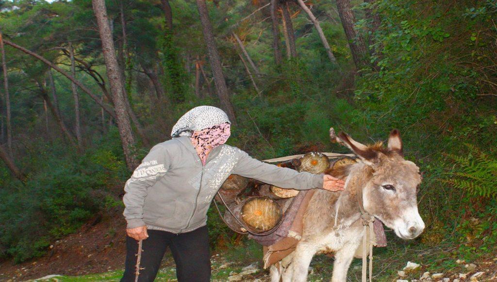 حرب على غابات الساحل السوري... من يحرقها عمدا؟ | حكاية ما انحكت |  SyriaUntold